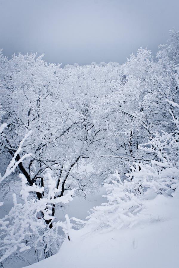 森林下了雪 免版税库存照片