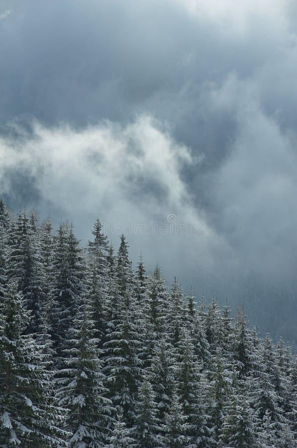 森林下了雪 免版税库存图片