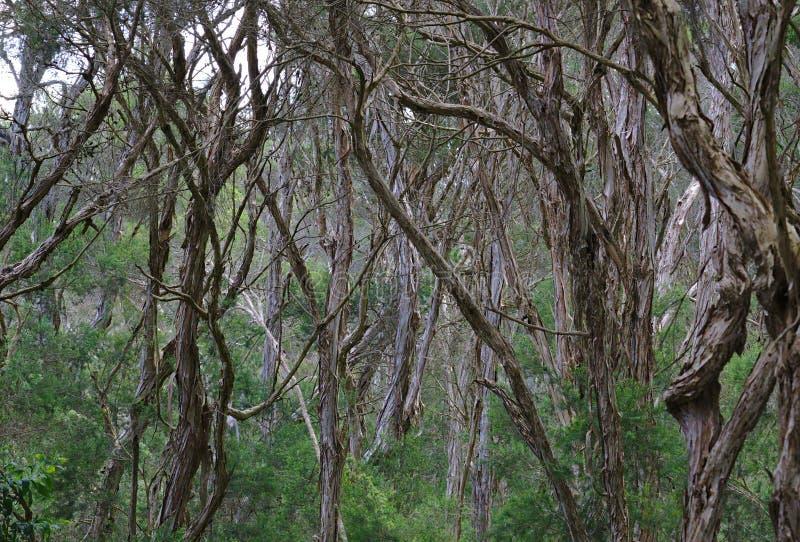 森林中部有许多的树 免版税库存图片
