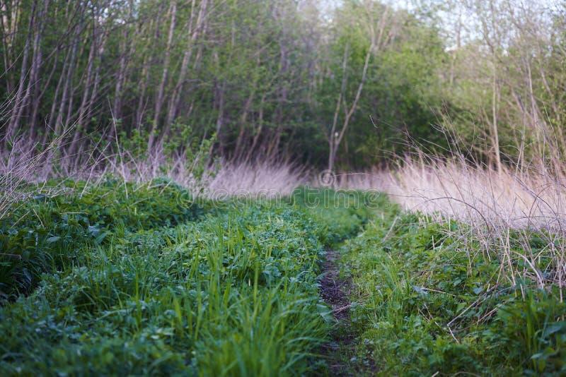 森林中间的一条旧土路 免版税库存图片