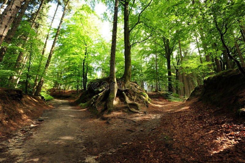 森林交叉路 库存图片