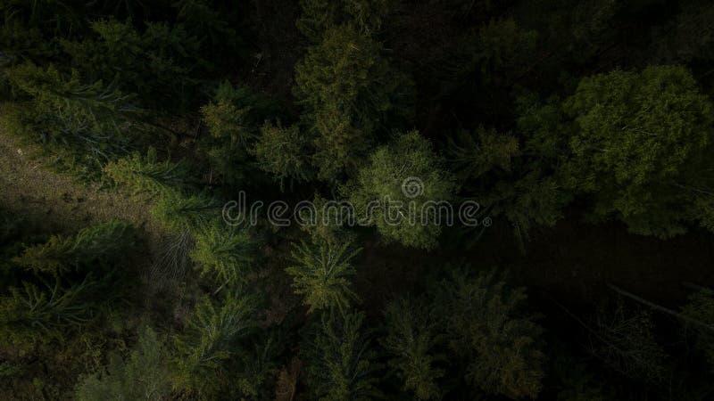 森林从上面黄昏的 库存图片