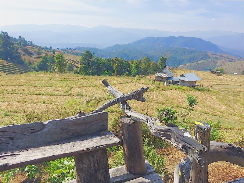 森林以北部泰国nuture绿色 免版税库存照片