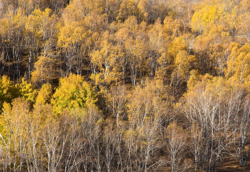 森林倾斜日落黄色 库存照片