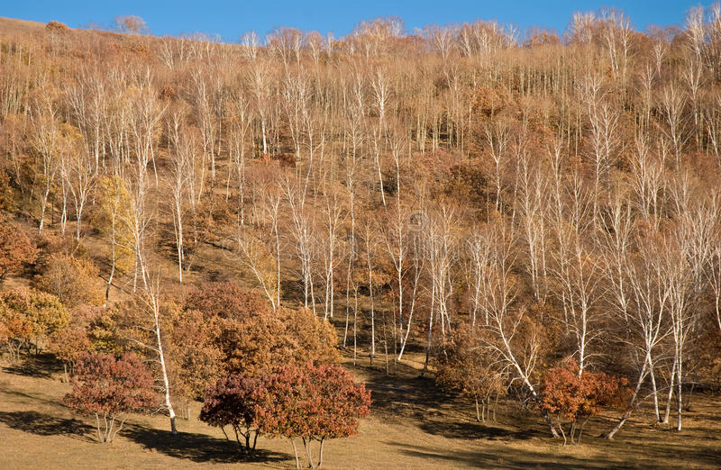 森林倾斜日落黄色 图库摄影