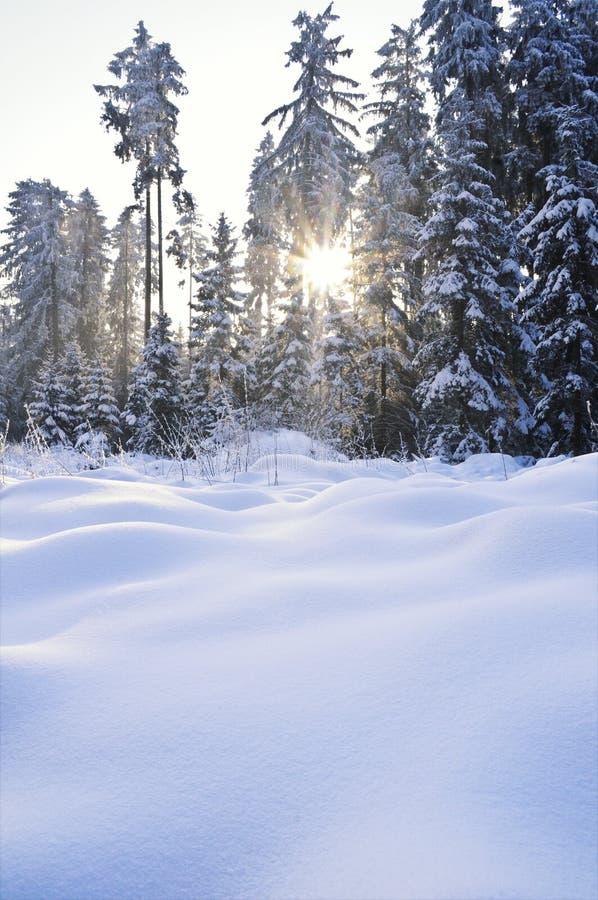 森林光束冬天 库存照片