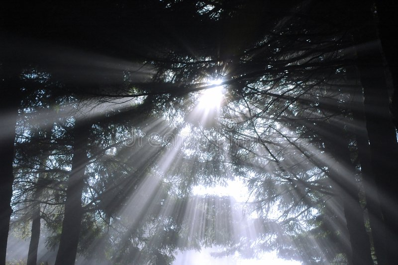 森林光束 库存照片