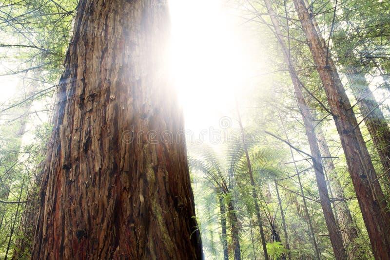 森林光 库存图片