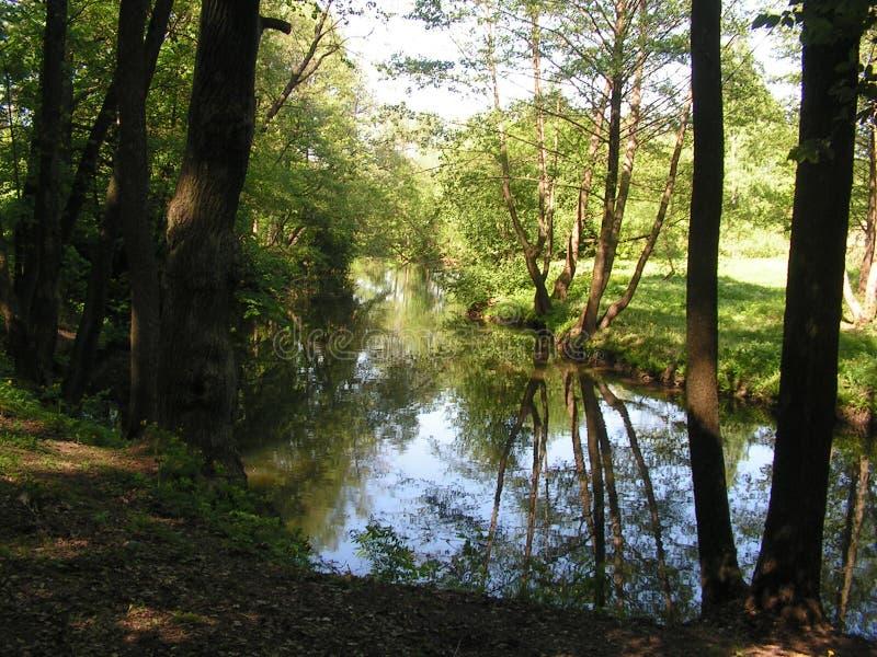 9 森林公园'DROZDY'在米斯克白俄罗斯 免版税库存图片