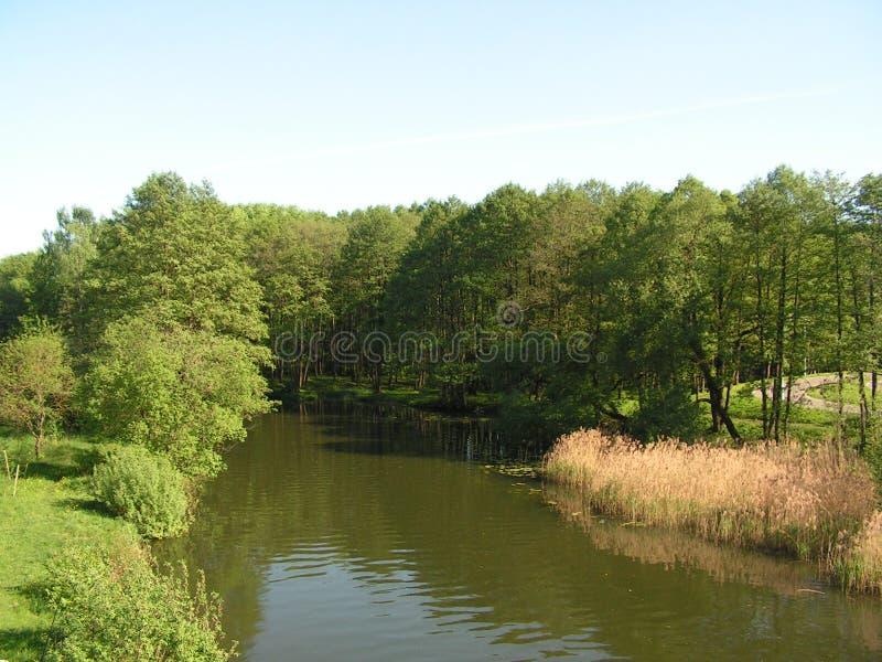13 森林公园'DROZDY'在米斯克白俄罗斯 库存照片