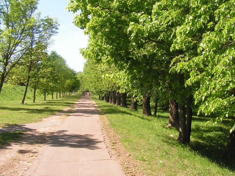 森林公园'DROZDY'在米斯克白俄罗斯 库存照片