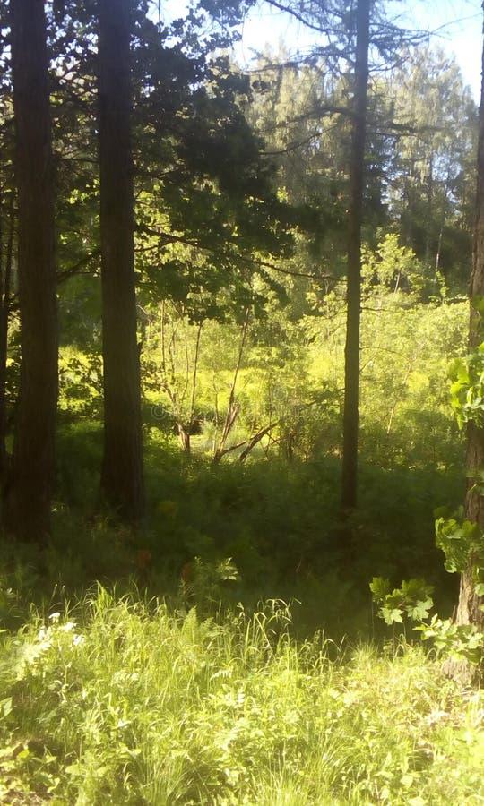 森林公园和自然 自然奇迹  库存照片