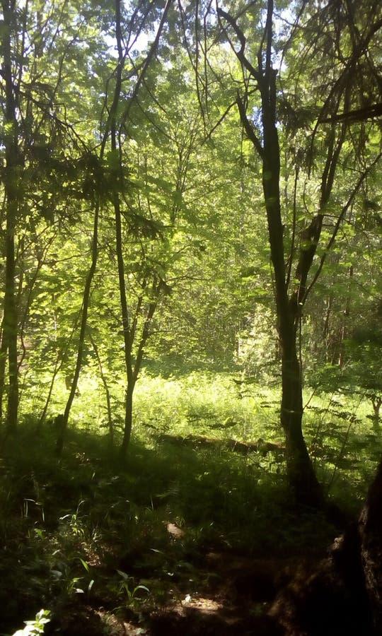 森林公园和自然 自然奇迹  免版税库存图片