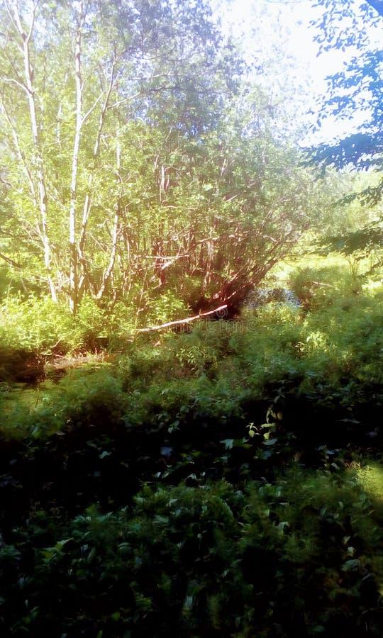 森林公园和自然 自然奇迹  库存图片