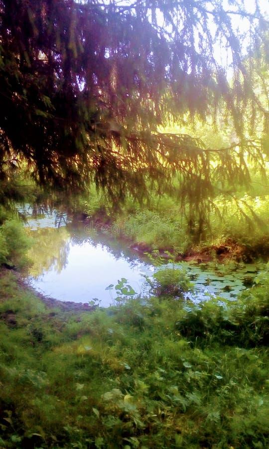 森林公园和自然 自然奇迹  免版税库存照片