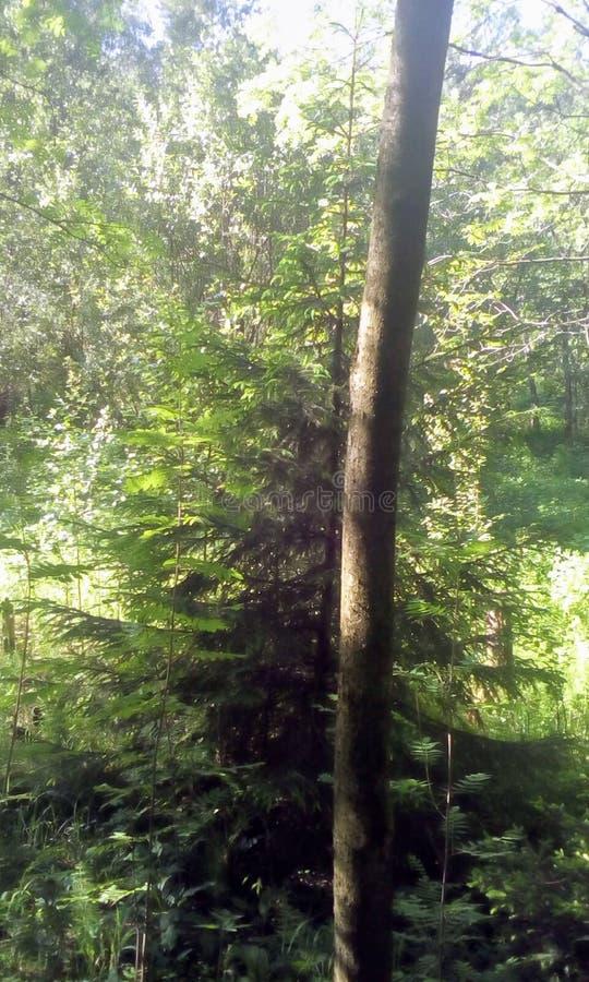 森林公园和自然 自然奇迹  免版税图库摄影