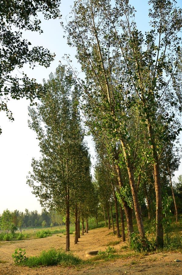 森林公园在森林 免版税库存照片