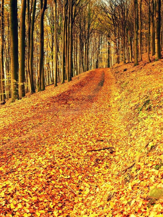 森林公路在秋天 秋天横向 叶子的颜色. 夏天, 天空.图片