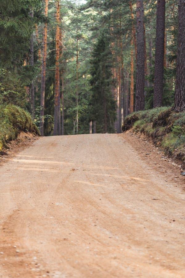 森林公路旅游远足的道路的看法,朝向更深在森林在晴朗的夏日,部分模糊的照片以自由 图库摄影