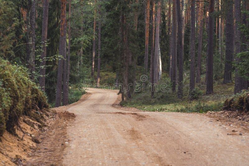 森林公路旅游远足的道路的看法,朝向更深在森林在晴朗的夏日,部分模糊的照片以自由 免版税库存照片