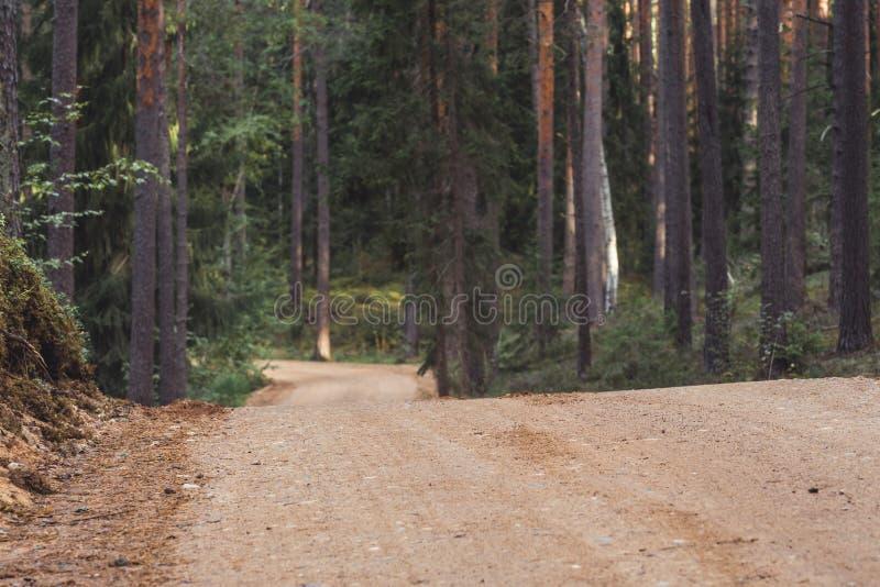 森林公路旅游远足的道路的看法,朝向更深在森林在晴朗的夏日,部分模糊的照片以自由 免版税库存图片