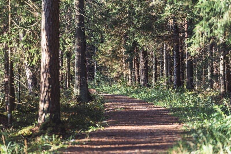 森林公路的看法,朝向更深在森林在晴朗的夏日,与自由空间的部分模糊的照片文本的 图库摄影