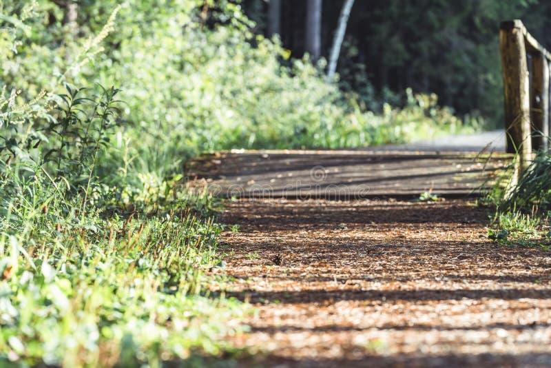 森林公路的看法,朝向更深在森林在晴朗的夏日,与自由空间的部分模糊的照片文本的 库存照片