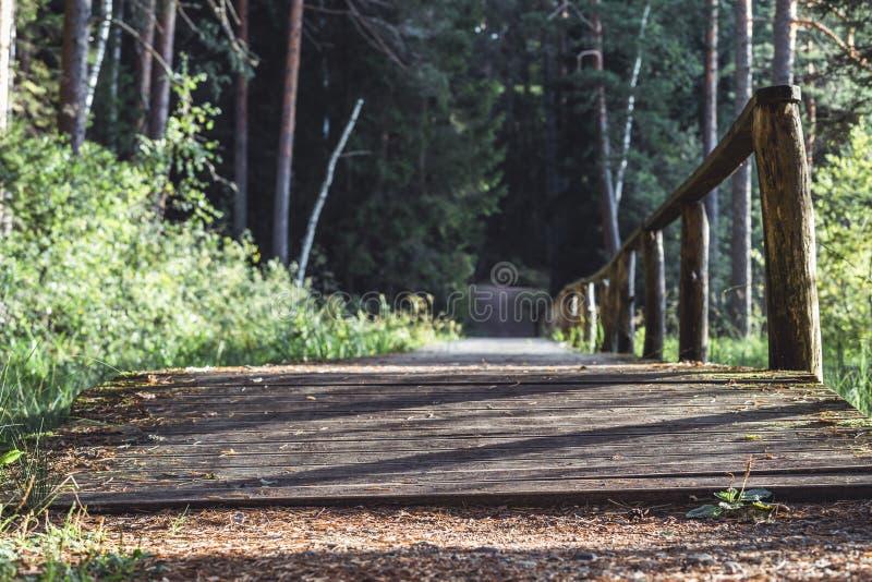 森林公路的看法,朝向更深在森林在晴朗的夏日,与自由空间的部分模糊的照片文本的 库存图片