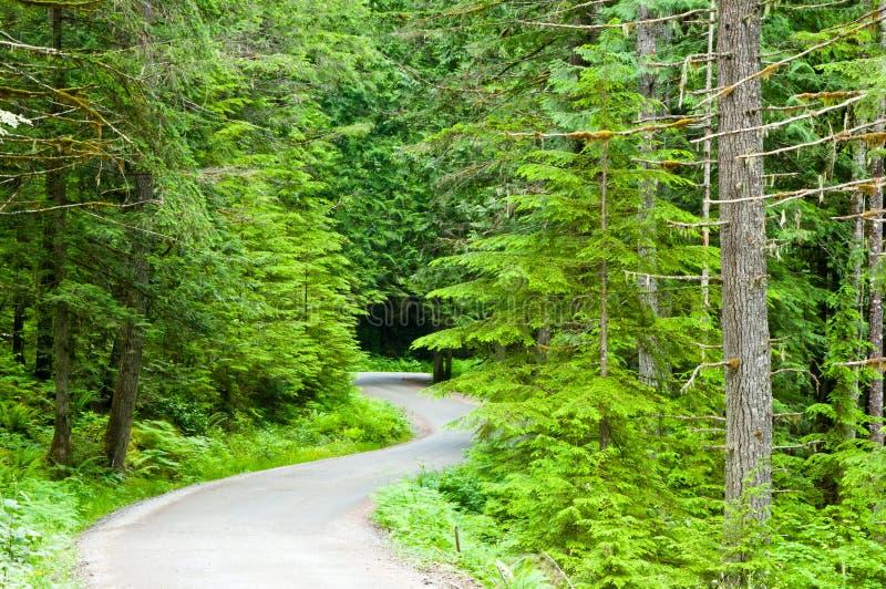 森林公路绕 免版税库存图片