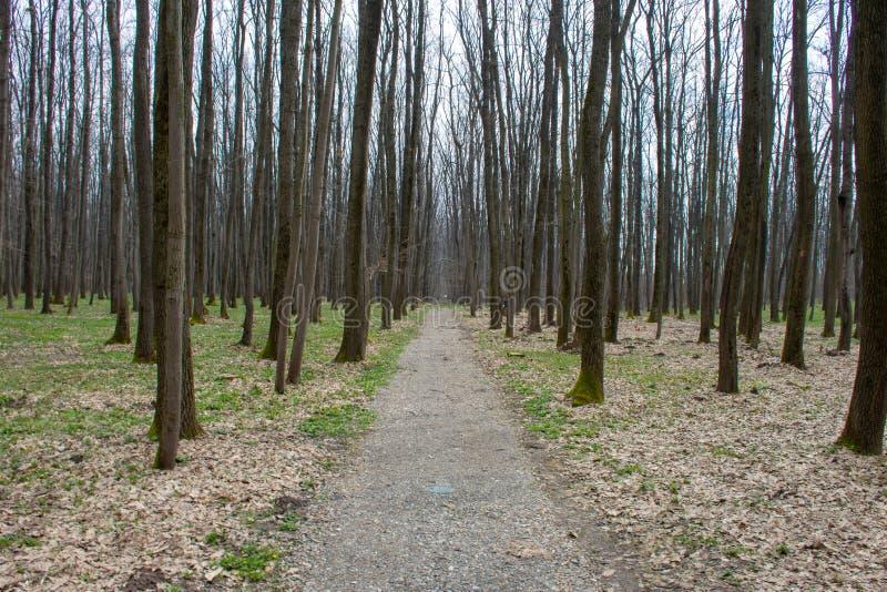森林公路视图在春天早晨 免版税库存图片