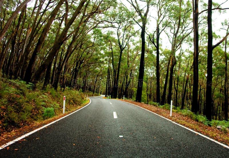 森林公路 免版税库存图片