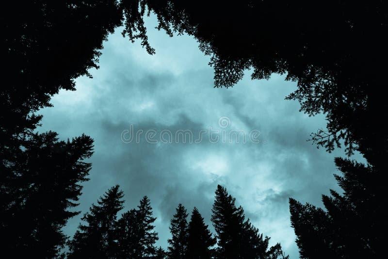 森林冷杉木风景、冠和与黑暗的云彩的剧烈的天空,森林剪影  免版税库存图片