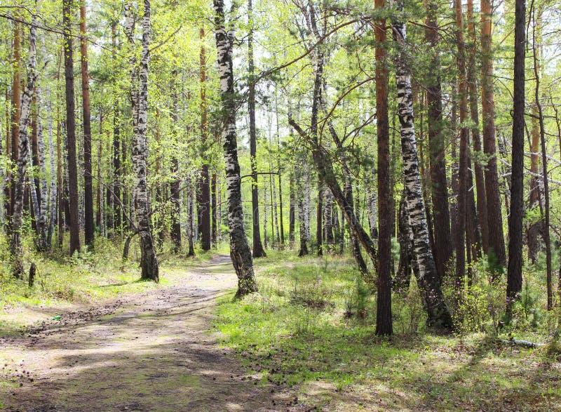 森林凉爽 库存图片