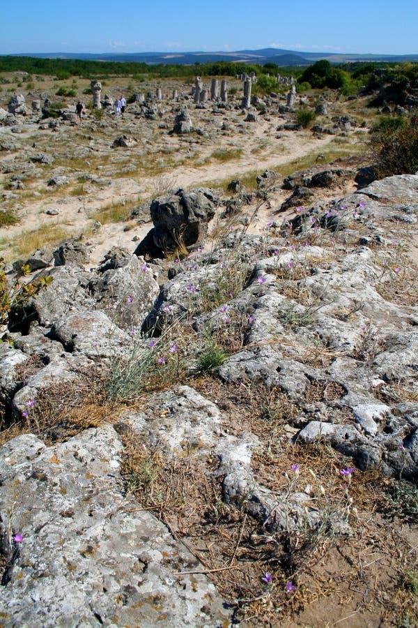 森林化石 免版税库存图片