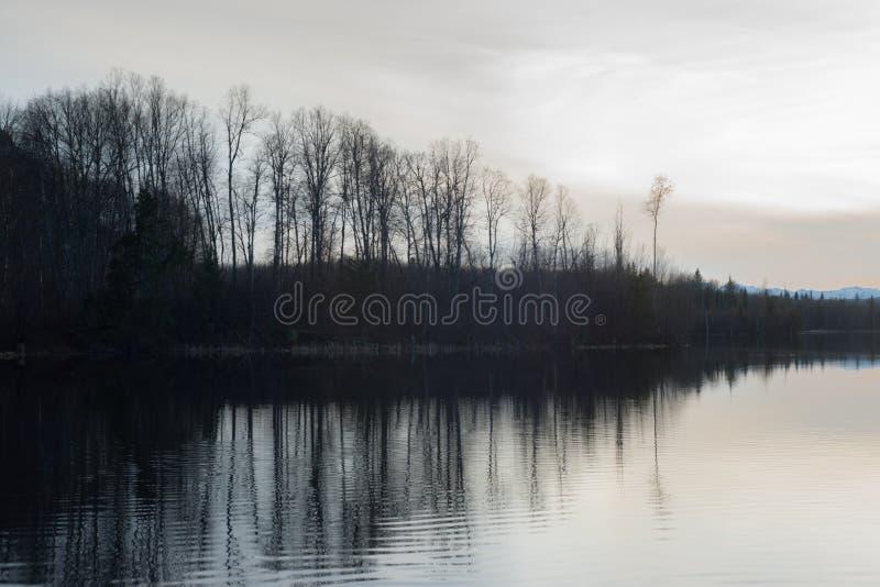 森林反射剪影在加拿大 库存图片