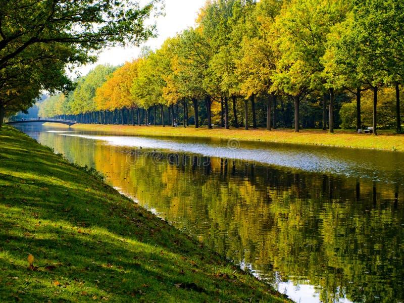 森林反射的河 免版税库存照片