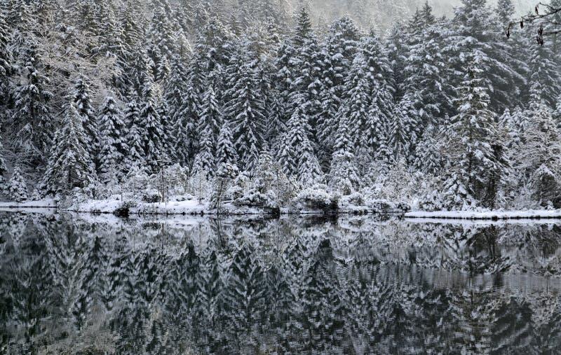森林反射 库存图片