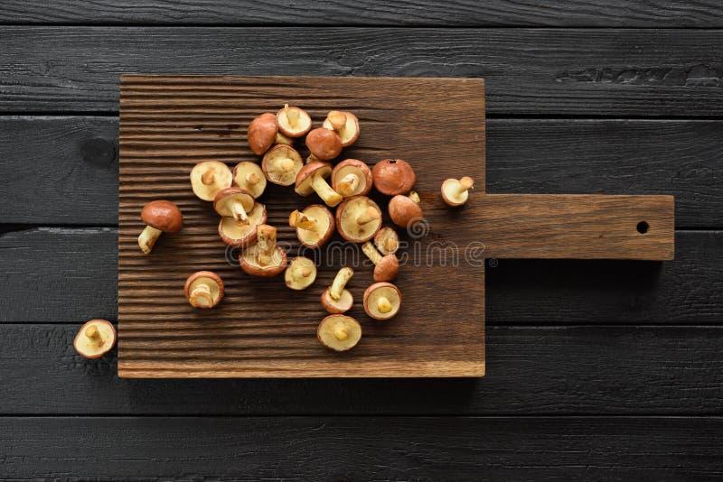 森林可食的蘑菇 未加工的溜滑起重器牛肝菌类luteus 图库摄影