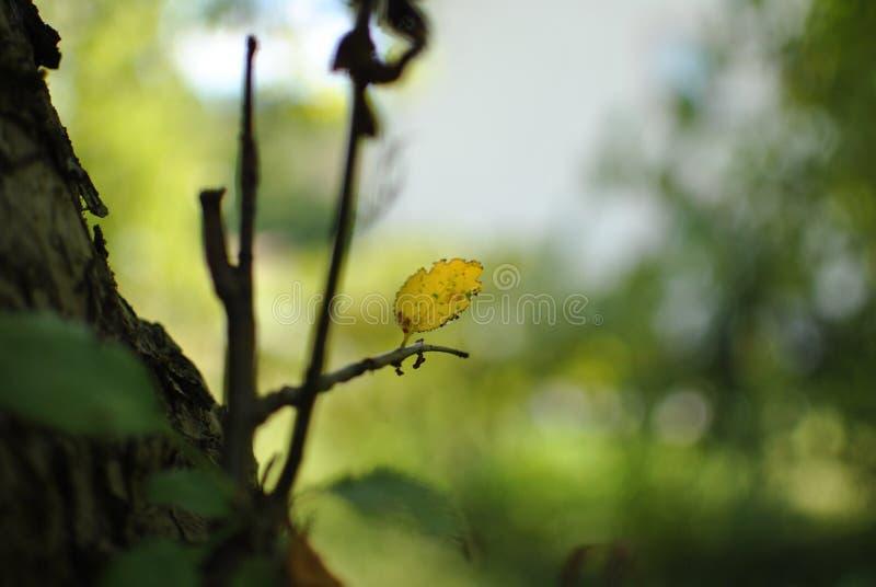 森林叶子 库存照片