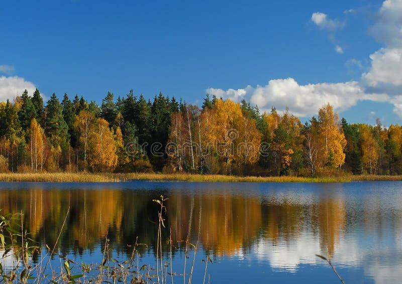 森林和反射 图库摄影