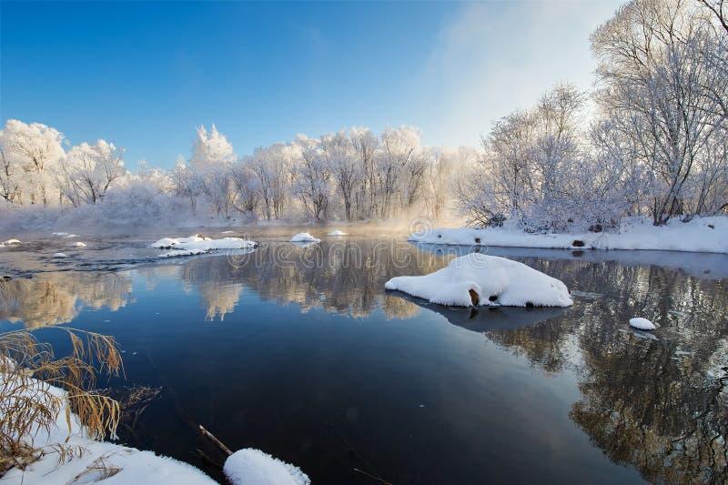 森林和安静的河水霜  库存图片