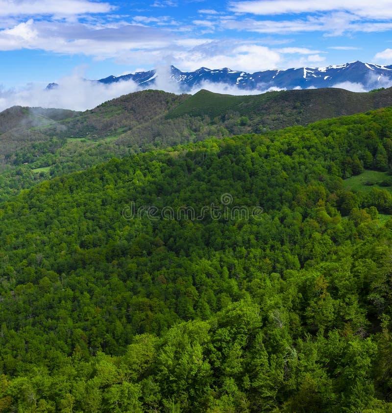 森林和山从Piedrasluengas观点在丰特斯Carrionas自然公园  免版税图库摄影