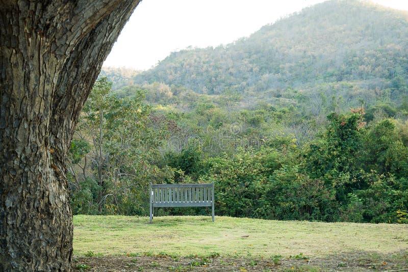 森林和山自然绿色环境美化与一把椅子为放松 图库摄影
