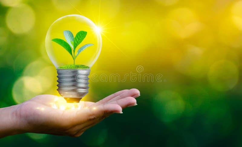 森林和树在光 环境保护和全球性变暖的概念种植增长的里面灯bul 免版税库存照片