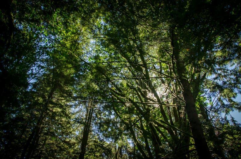 森林和树 免版税库存照片