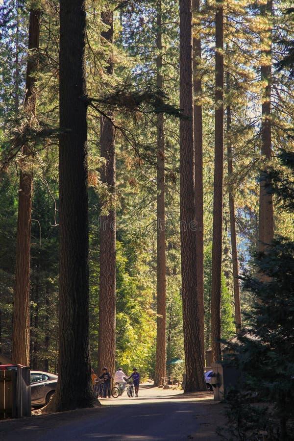 森林和森林在优胜美地国家公园在美国 免版税库存照片