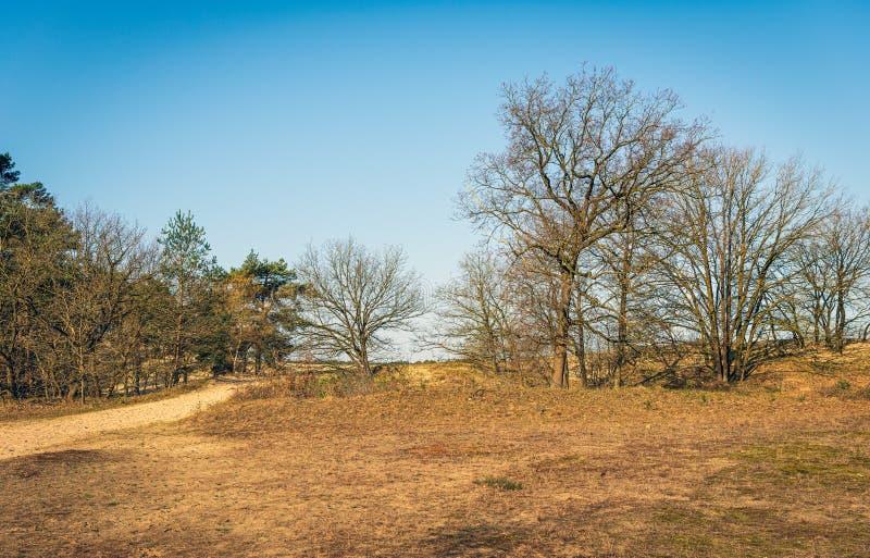 森林和欧石南丛生的荒野在春季的开始在荷兰 免版税库存照片