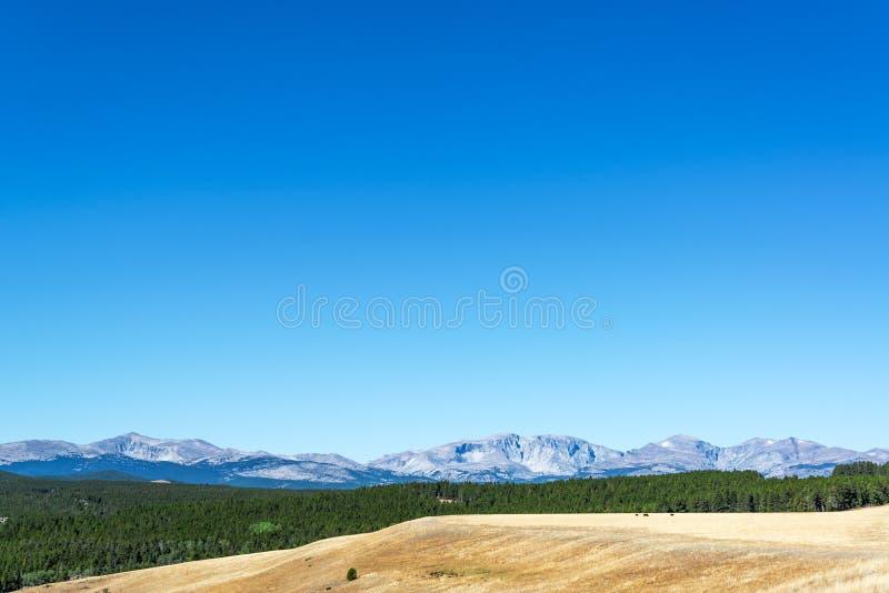 森林和比格霍恩山 免版税图库摄影