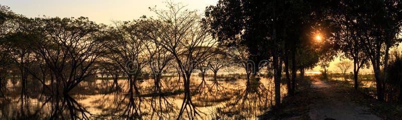 森林和水反射与金黄小时 免版税库存照片