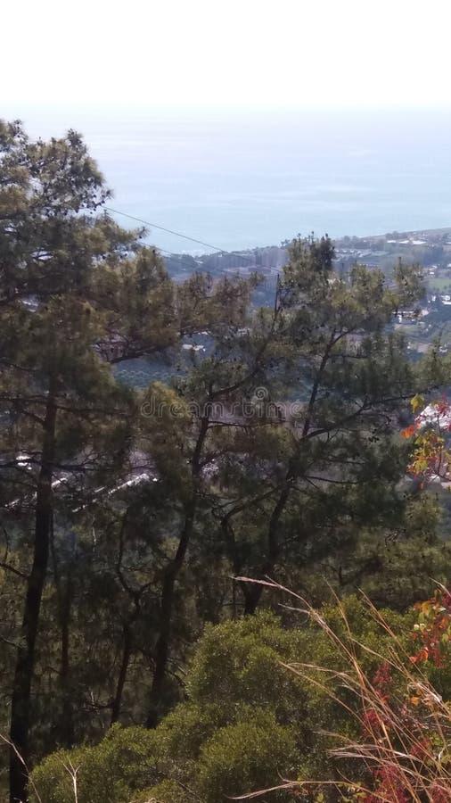 森林和海运 免版税图库摄影
